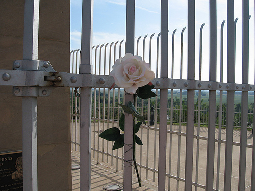 A rose for Sergeant Floyd. At the Sergeant Floyd memorial in Sioux City, Iowa.