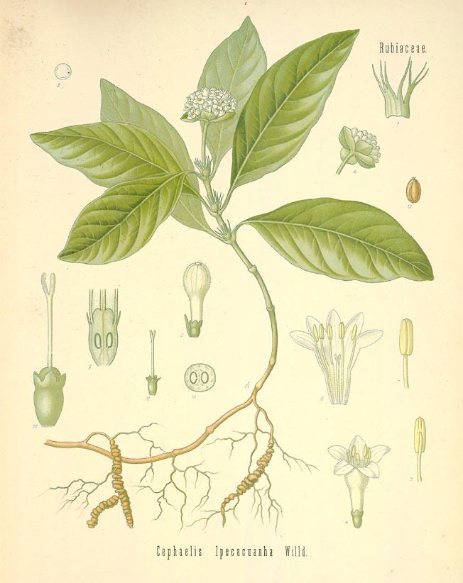 Lewis & Clark's Medicine Chest | Frances Hunter's American ...