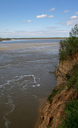 Chickasaw Bluff #1