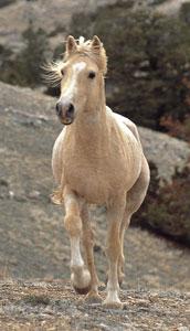 Cloud the wild horse