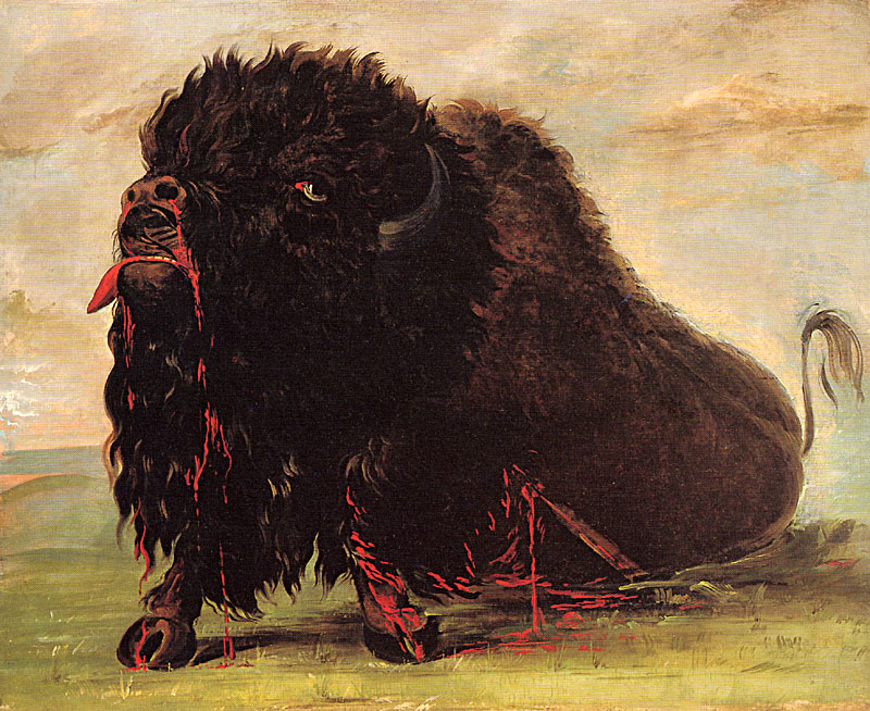 Dying Buffalo by George Catlin
