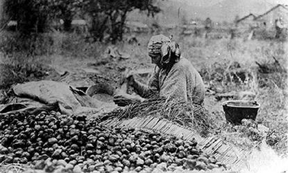 Nez Perce woman sorting camas bulbs